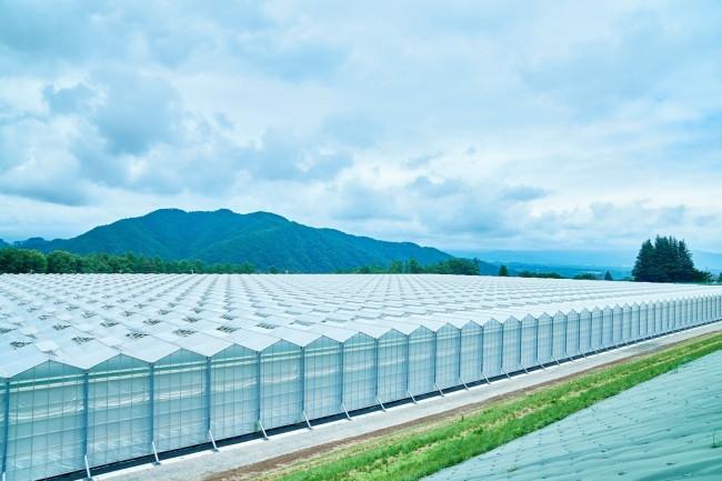 NTT初の農業×ICT専業会社「NTTアグリテクノロジー」とサラダ ...