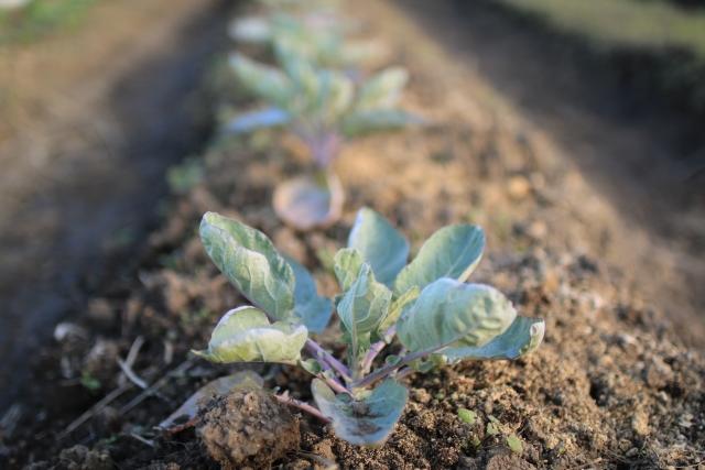土作り 家庭 菜園